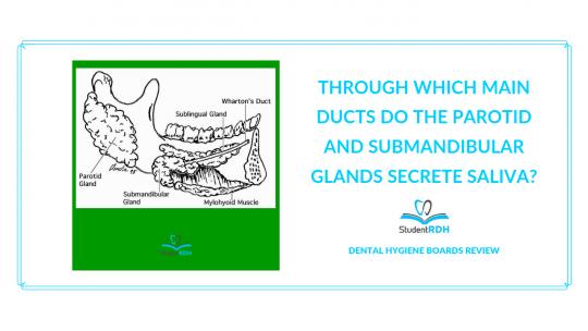 saliva ducts, dental hygiene exam prep