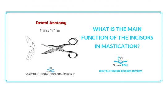 dental anatomy, mastication, incisors, dental hygiene exam prep