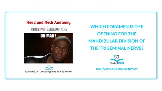 head and neck anatomy, foramen ovale, dental hygiene exam prep