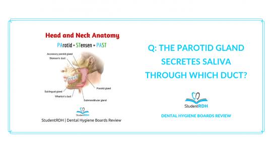 head and neck anatomy, parotid gland, saliva, dental hygiene exam prep