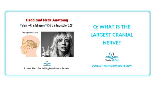 head and neck anatomy, cranial nerve, dental hygiene exam prep