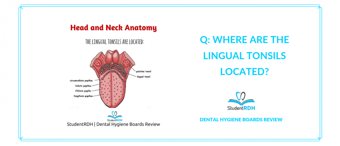 Q Where Are The Lingual Tonsils Located Studentrdh Blog