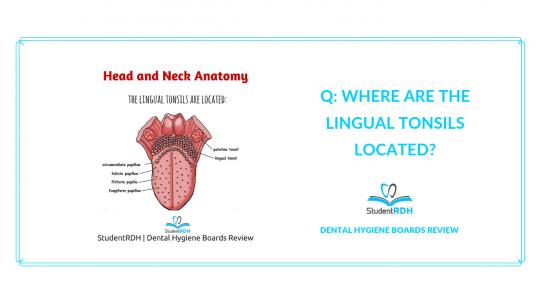 head and neck anatomy, lingual tonsils, dental hygiene exam prep