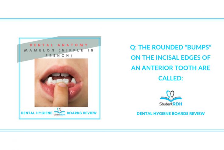 dental anatomy, mamelons, incisors, dental hygiene exam prep