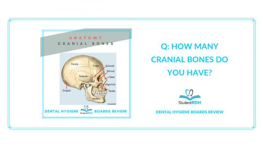 head and neck anatomy dental hygiene exam prep